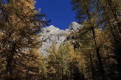 Tzeusier (bulbocode909) Tags: valais suisse tzeusier montagnes nature forêts arbres mélèzes automne paysages bleu jaune