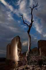 The Haunted Mansion Of Joshua Tree (MiramontesPhotography) Tags: joshuatreenationalpark california bluehour ruin historical adobe ryanranch clouds cloudscape snag deadtree fallingapart