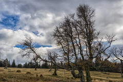 Wood Art (*Capture the Moment*) Tags: 2017 bavarianforest bayerischerwald bäume forest fotowalk landschaften natur nature sonne sonya7m2 sonya7mii sonya7mark2 sonya7ii sonyfe1635mmf4zaoss sonyilce7m2 sun trees wald wetter