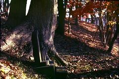 Buddhas on the ground (threepinner) Tags: mikasa hokkaidou hokkaido northernjapan japan buddha hill autumn pentax me rikenon 50mm f17 negative iso100 selfdeveloped reversal negaposidevelopment 観音山 三笠 北海道 北日本 日本 野仏 石仏 紅葉
