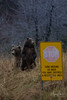 Bears Clearly Can't Read (wyrickodiak_9) Tags: kodiak alaska brown bear grizzly ursus mammal wildlife island fishing cubs