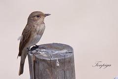 micro macro (Tonpiga) Tags: tonpiga uccelliinlibertà faunaselvatica micro macro