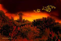 MEXICAN AUTUMN. (Viktor Manuel 990.) Tags: sunset autumn otoño cactus sky cielo birds aves digitalart artedigital nature naturaleza querétaro méxico victormanuelgómezg painting pintura