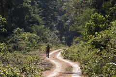 The jungle road (ramosblancor) Tags: naturaleza nature paisaje landscape camino path road pista bosquetropicallluvioso tropicalrainforest selva jungle terrafirme humanos humans hombre man wandering paseo amazonía amazonia brasil brazil claro clearing
