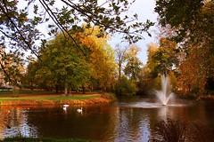 The Black Swan (Daphne-8) Tags: arben colors colours colores autumn herbst trees bäume arbres arboles otoño autunno outono árvores bomen herfst kleuren forest estanque étang bassin stagno lagoa vijver pond water aqua agua wasser cisnes swans zwanen cygnes cigno schwäne