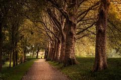 Autumn (bjdewagenaar) Tags: nature people autumn trees colors sony sonya58 sonyalpha sonyphotographer minolta minoltalens primelens 50mm f14 holland dutch gorinchem lightroom raw