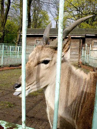 zoo10 ©  serge.zykov
