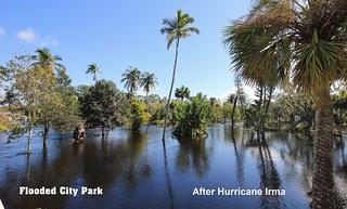After Hurricane Irma