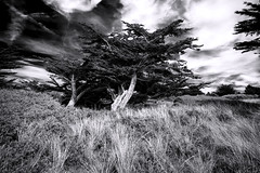 We Go Down with the Dew in the Morning (Novowyr (very slow)) Tags: dunes dhatainville normandie france frankreich dünen natur nature trees sky capdecarteret wind formed patrimoinenaturel naturereserve landscape