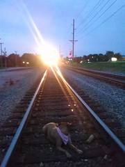 Huh - HTT (EX22218 - ON/OFF) Tags: light dog tracks bottle plastic railroad ties steel metal stone stones pole telephone wires paws pause horn train signals meaning hearing safety cmwd cmwdorange fatalities accidents obannon station louisville kentucky csx letsguide wearekentucky