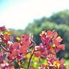 Φθινόπωρο.Τα χρώματά σου αγάπησα ! (sifis) Tags: greece fall color love nature sakalak nikon