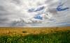 napier fields (mountainSeb) Tags: bleh buchutea carpediem
