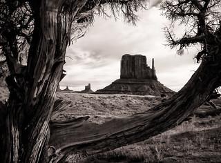 Mitten and Cedar Tree, Monument Valley, AZ