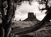 Mitten and Cedar Tree, Monument Valley, AZ (1mpl) Tags: canoneos20d arizona monumentvalley navajonation themittens rockformations travelphotography bw monochrome niksilverefexpro