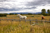 Horses on the Range (Rick Derevan) Tags: clouds landscape outside grandtetons wyoming scenic jacksonhole animals horses horse places mountain
