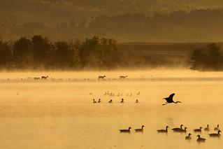 Misty morning Sunrise Whitetails