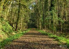 Una de otoño (JCarlos.) Tags: tapizado otoño autum verde arbol hojas marron green road camino bertiz sendero