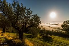 Un altra giornata ,una nuova situazione (Danilo Agnaioli) Tags: nebbia perugia umbria italia colline sole alberi olivi