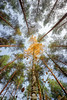 Fall /1 (Gasolin3) Tags: fall autumn canon 600d trees 1020 stm efs tree yellow leaves middle centered focus seperated turning orange green time year september sky composition magnificent different others forest