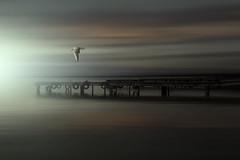 THE PEACE (oroyplata.) Tags: peace paz relax albufera lake lago paloma luz light pasarela embarcadero pier landscape paisaje valencia photography descarte pax