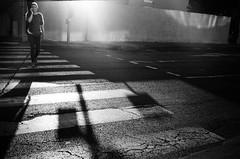 grainy zebra (gato-gato-gato) Tags: 35mm contax contaxt2 fr france frankreich iso125 ilford ls600 montpellier noritsu noritsuls600 strasse street streetphotographer streetphotography streettogs t2 analog analogphotography believeinfilm film filmisnotdead filmphotography flickr gatogatogato gatogatogatoch homedeveloped pointandshoot streetphoto streetpic tobiasgaulkech wwwgatogatogatoch occitanie black white schwarz weiss bw blanco negro monochrom monochrome blanc noir strase onthestreets mensch person human pedestrian fussgänger fusgänger passant autofocus ferien holidays urlaub adventure travel travelling