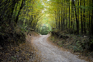 A Walk Through the Forest in Autumn