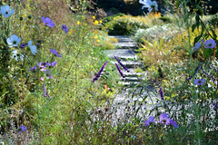 Garden Path (KaDeWeGirl) Tags: newyorkcity bronx wavehill botanical garden path flowers green purple tranquil