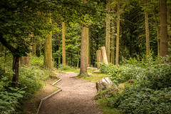 Winding through the woods (Anthony P26) Tags: buckinghamshire category england landscape places travel wendoverwoods wood woods forest path grass tree trees canon canon1585mm canon70d outdoor landscapephotography travelphotography unitedkingdom countryside nature uk english british greatbritain