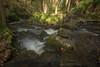 Stepping into the light (david_allott) Tags: 1635mmf4 autumn hepworth mortonwood october dappledshade dreamy fallenleaves meander steppingstones waterfalls