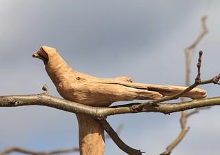 wood robin?