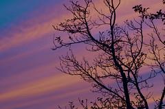 Sunset 20150815 (caligula1995) Tags: 2015 clouds plumtree smoke sunset