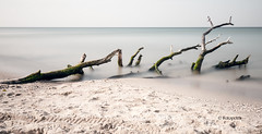 umgefallen .....................in Farbe (petra.foto busy busy busy) Tags: fotopetra canon 5dmarkiii natur dars fischland meklenburgvorpommern strand ndfilter meer ostsee baum wasser langzeitbelichtung totholz