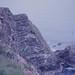 Campion. South Ronaldsay. East bird cliffs. Stews Point
