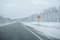 That's what autumn looks like north of North Bay (beyondhue) Tags: dryden transcanada highway snow beyondhue road moose warning sign fall autumn northern ontario canada