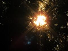 Morning Sun. (dccradio) Tags: lumberton nc northcarolina robesoncounty outdoors outside nature sun sunshine sunlight morning goodmorning tree trees plant foliage leaf leaves canon powershot elph 520hs project365 photooftheday photo365