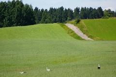 Summer landscape (Jurek.P) Tags: mazury masuria landscape poland polska fields storks road countryside jurekp sonya77