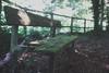 DSC01913 (Ctharlhie) Tags: sonynex5 sony nex5 green forest bench wood moss atmosphere bokeh shallow depthoffield filmeffect vivitar 28mm f19 series1 pixco focalreducer focal reducer