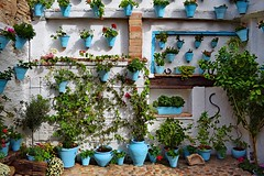 Patio Cordobes (Jocelyn777) Tags: plants flowers courtyard patio patiocordobes colours blue cordoba andalucia spain