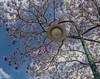 A light in the shade (HDR) (idunbarreid) Tags: lamp jacarandatree