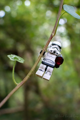Jungle Trooper (that_brick_guy) Tags: star wars srarwars lego legostarwars legostormtrooper stormtrooper storm trooper minifig minifigs minifigure minifigures legominifig legominifigs legominifigure legominifigures jungle forest endor vine plant tree trees green imperial empire toyphotography toy photography nikon nikkor dslr d7200 18g