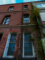 Broken Pipes (Steve Taylor (Photography)) Tags: broken barred architecture window brick glass newzealand nz southisland canterbury christchurch cbd city plant leaves weeds tree perspective damp