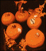 (Cliff Michaels) Tags: iphone iphone6 photoshop pse9 kroger flora pumpkins halloweenvegetables oranfe fall