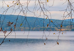 Autumn Twigs (bjorbrei) Tags: twigs branches leaves autumn fall lake water shore hills countryside maridalen maridalsvannet lakemaridal oslo norway