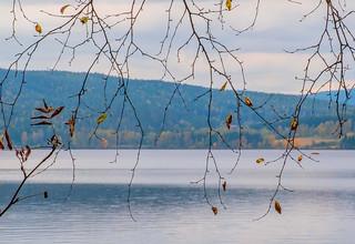 Autumn Twigs