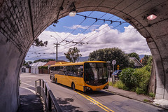 Seatoun Tunnel - Ferry Street (andrewsurgenor) Tags: transit transport publictransport bus wellington nz streetscenes buses omnibus yellow busse citytransport city urban newzealand