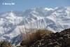 Bokeh Iranien  ☯ (bernard78br) Tags: 24105mmf4 5dsr canon eos iran pays photographie photographiematerieletlogiciels