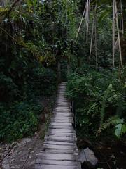 Bridge in Cocora valley (Christophe Maerten) Tags: colombia colombie jungle cauca huila  paramo tierra indiguena native people parque natural parc volcan volcano vulkaan valle de cocora bridge brug