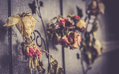 (C-47 [Offline]) Tags: sad sadness flowers colors retro vintage effect timeeffect toned composition canon100mml28 colorful cemetery closeup macro dof details deep darkfeelings daylight depth imagination flickr feel feelings fun flowersandcolors focus bokeh architecture art artistic artistique architectural artists door