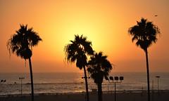 Sunset at Santa Monica Beach (franciscogualtieri) Tags: usa losangeles santamonica california beach beauty sunset palmtrees ocean sun nikond7000
