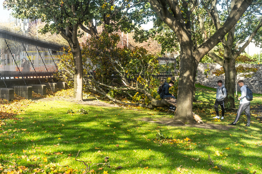 THE DAY AFTER OPHELIA VISITED DUBLIN [DAMAGED TREE IN KINGS INNS PARK]-133291